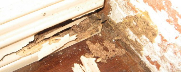 白蚁害虫侵蚀